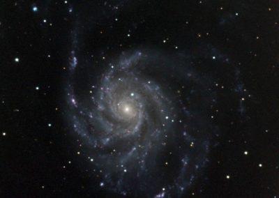 Joe Whorton M101